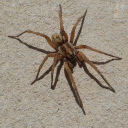 Уничтожение пауков в Нижнем Новгороде